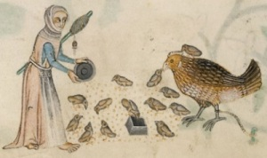 Yes, you can feed the chickens with a spindle tucked under your arm, but you do risk creating monster giant sparrow-style mother hens. Detail of f. 166v in London, BL MS Add. 42130, f. 166v. c. 1320-40.