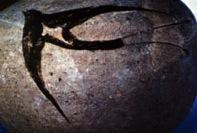 Akrotiri swallow vase (detail).